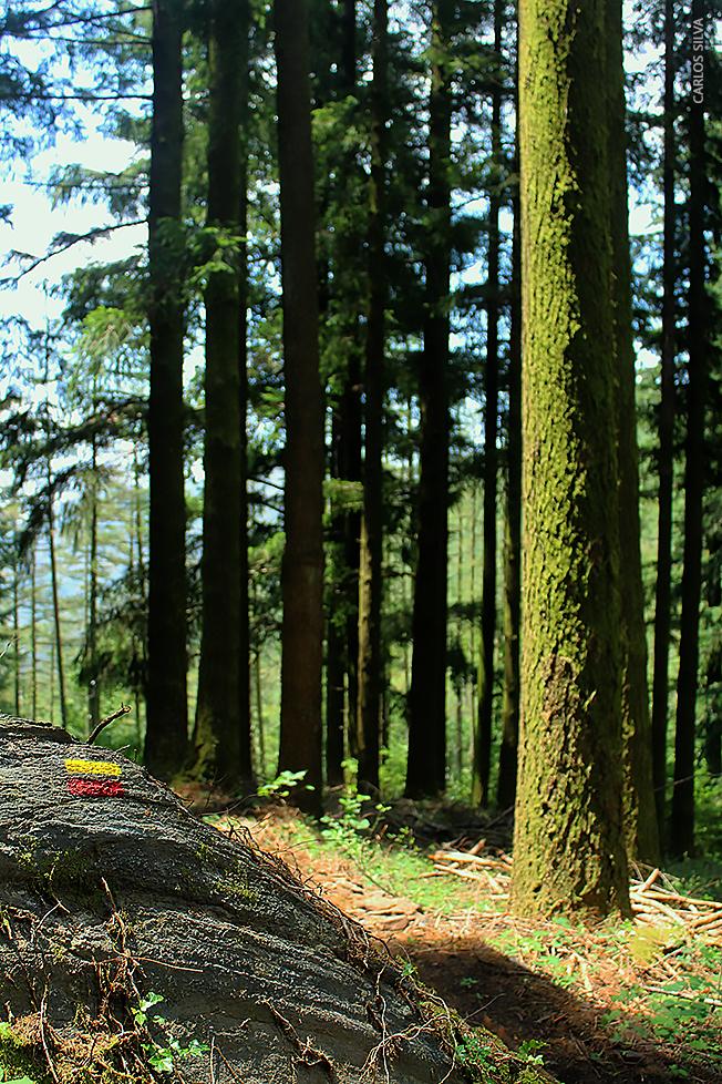 PR6_floresta centenária